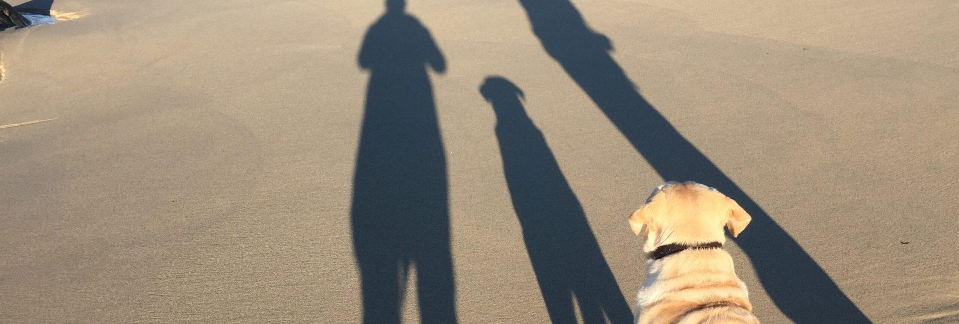 Schattenwurf mit Hund am Strand
